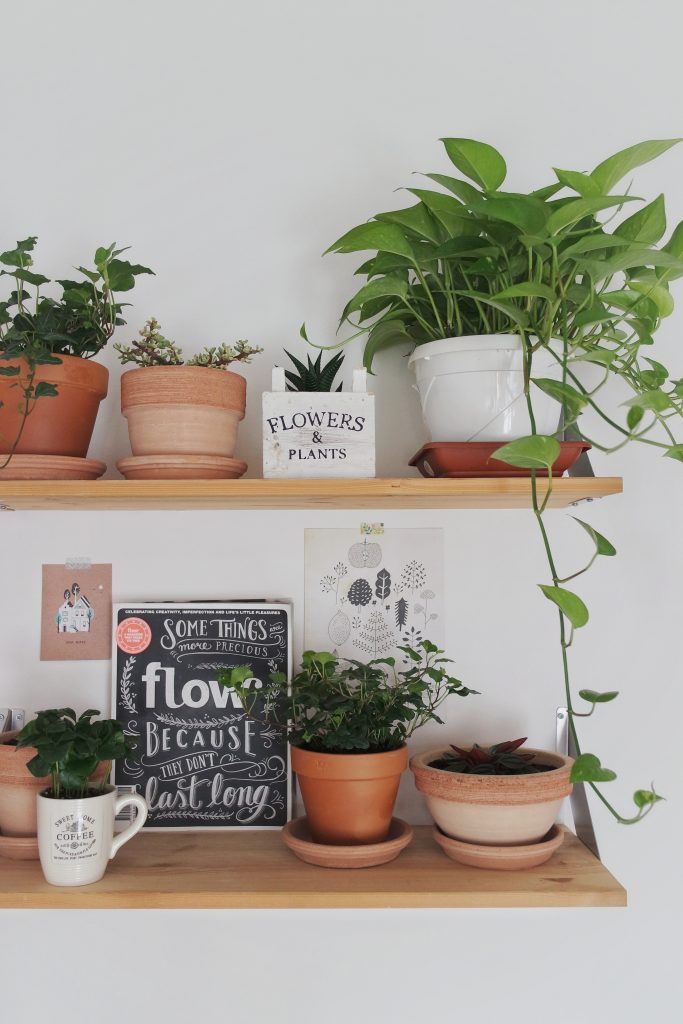 #therealmyselfiecottage_shelves_plants